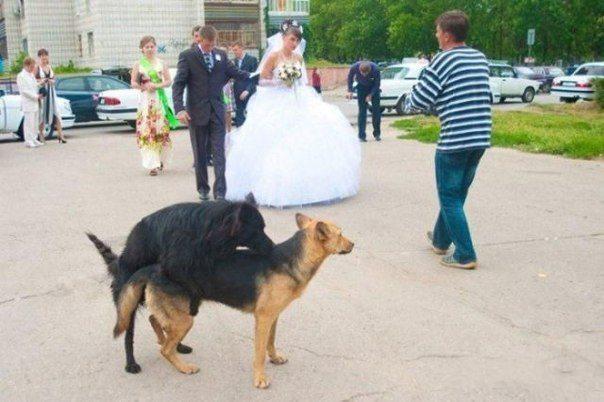 Что ждет невесту будущем