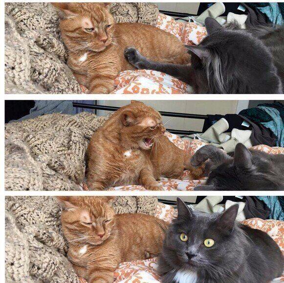 Кошачьи семейные отношения