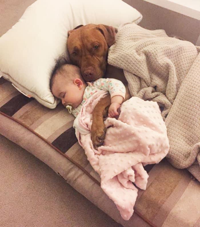 Собака спит с ребенком