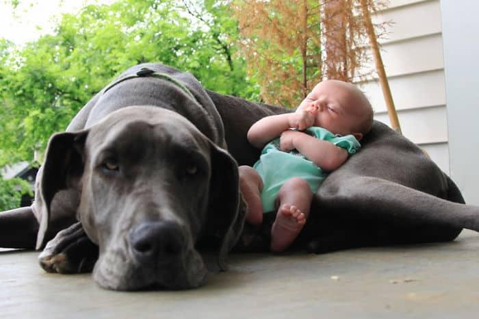 Ребенок спит на собаке