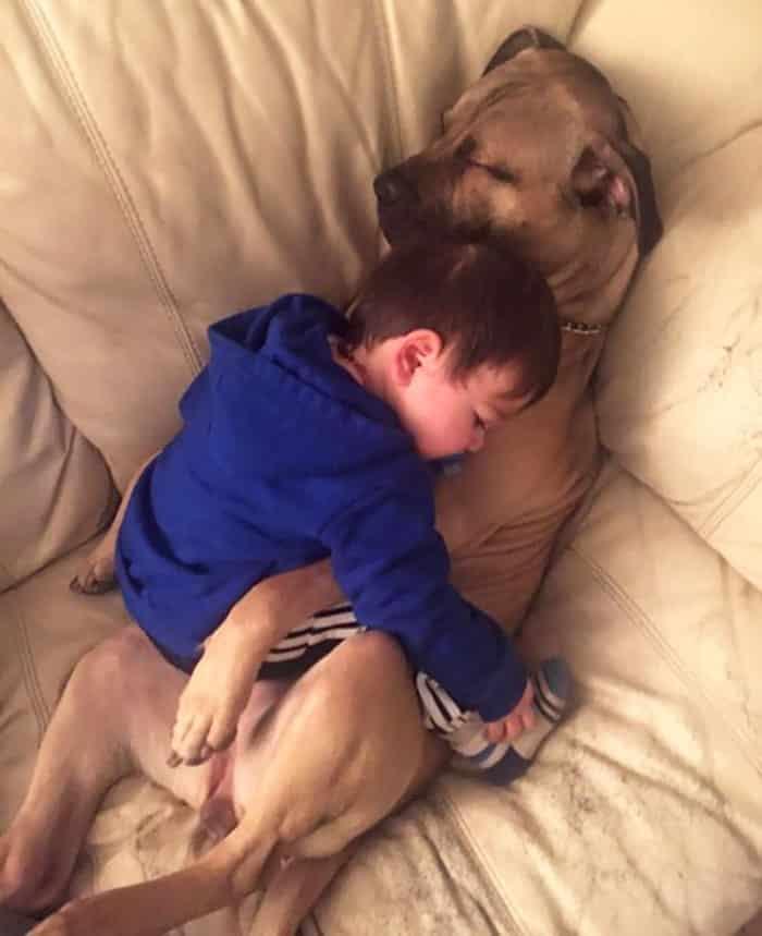 Заботливая собака с малышом