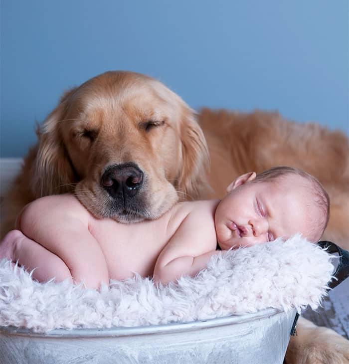 Собака с младенцем