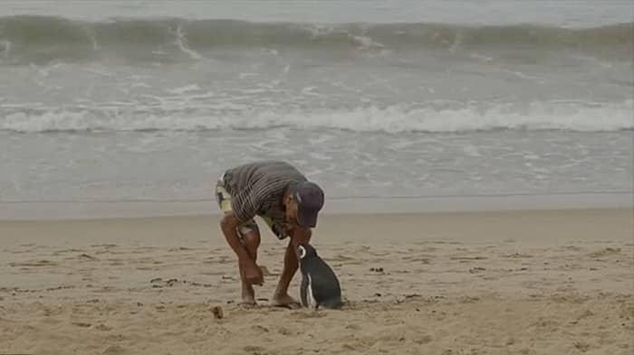 Спасенный пингвин