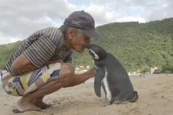 Визит пингвина