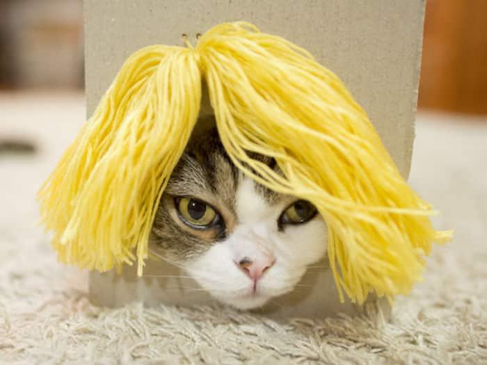 Кошка Мару на показе париков