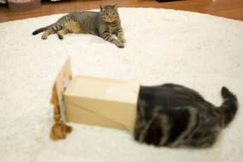 Кошка Мару рекордсмен Ютуба