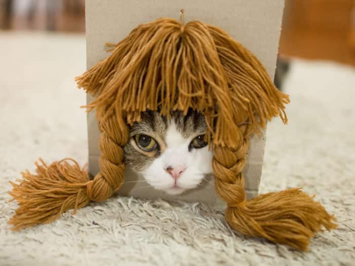 Кошка Мару с париком