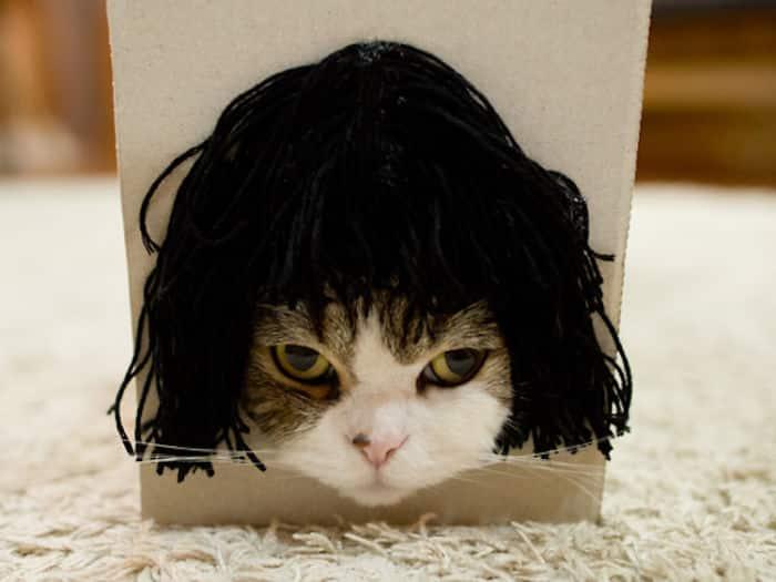 Кошка Мару надела парик