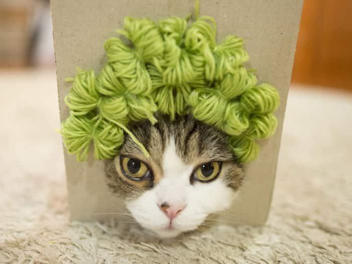 Кошка Мару на показе мод