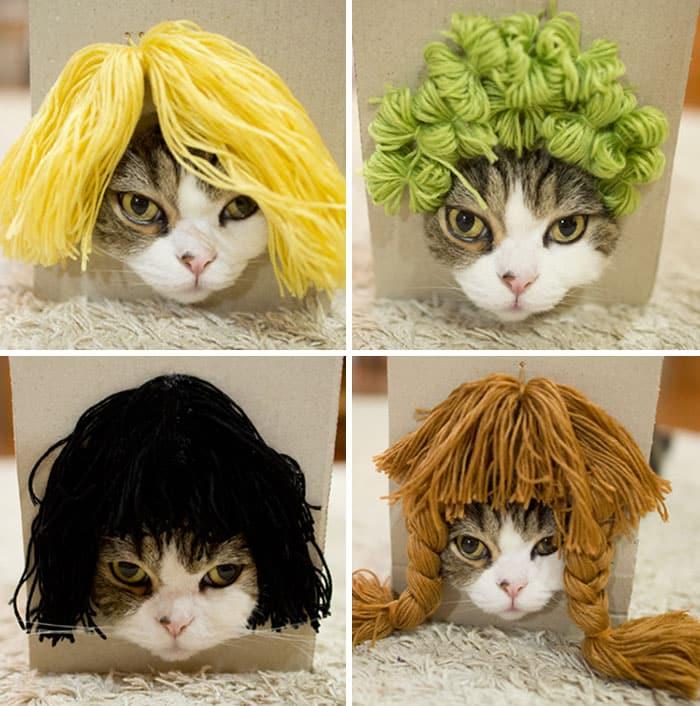 Кошка Мару примерила парики