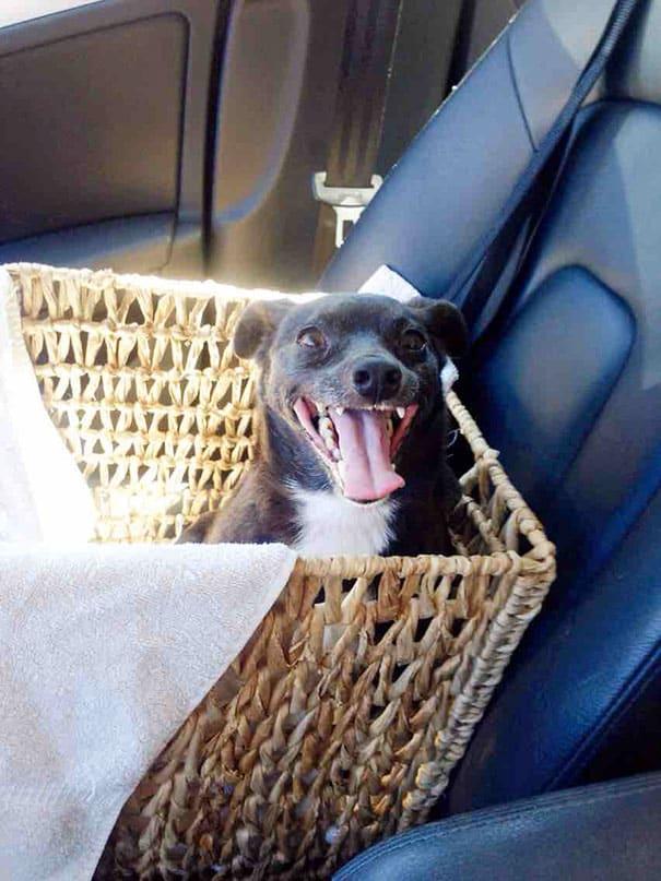 Счастливая старая собака