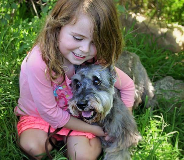 Любимая старая собака