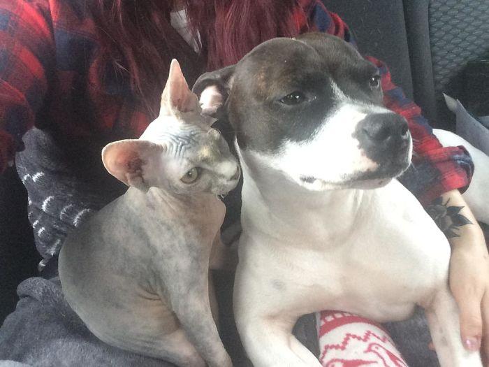 Друзья кот и собака