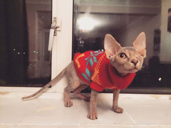 Котенок с одним глазом