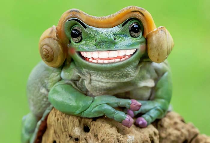 Очаровательная улыбка лягушки