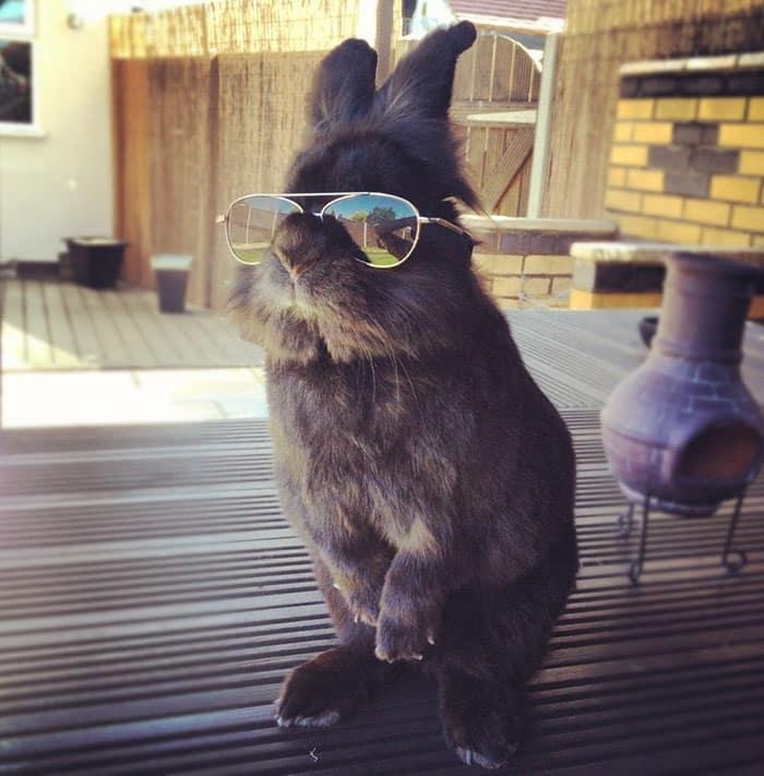 Кролик в солнцезащитных очках
