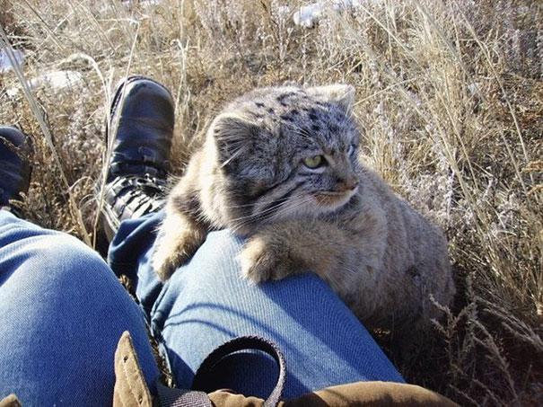 Котята - подкидыши