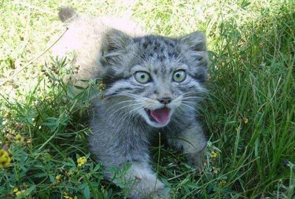 Озверевший котенок