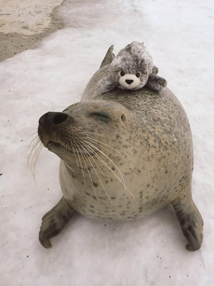 Тюлень и белёк