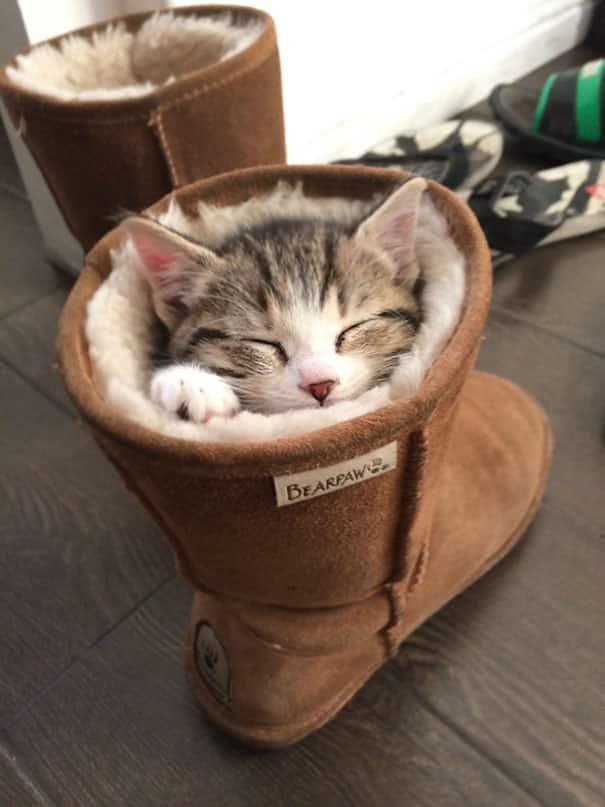 Котенок в сапоге