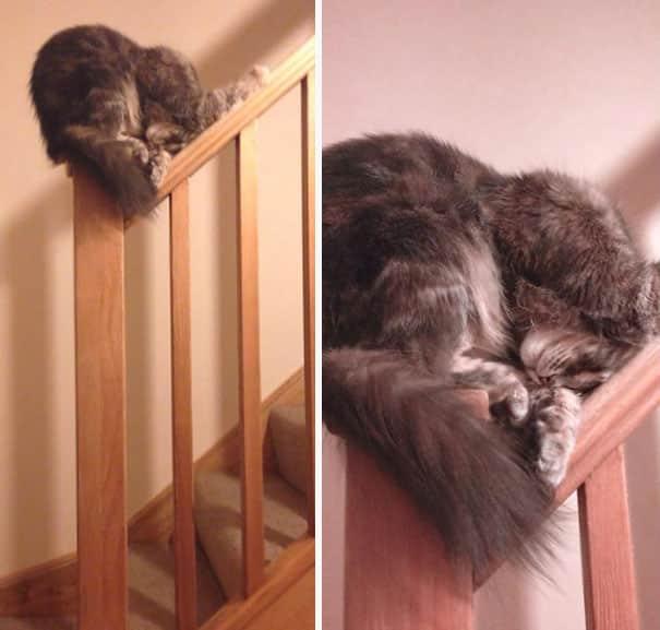 Кот спит на перилах