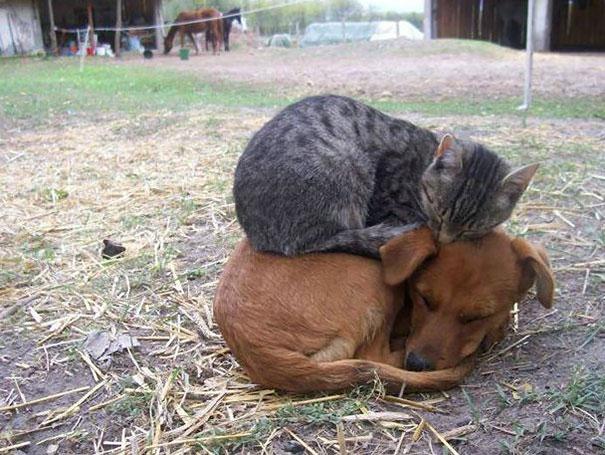 кот на собаке