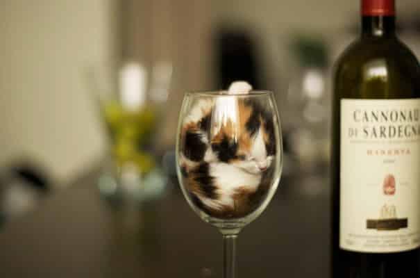 Котенок в бокале