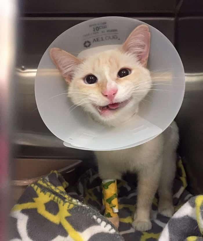 Кошка со сломанной челюстью