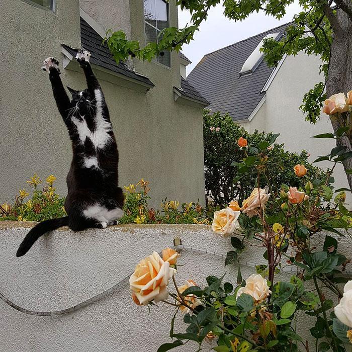 Кошка в стойке и лапами вверх