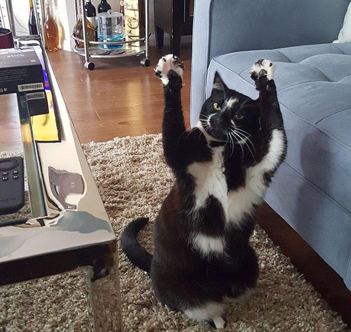 Забавная кошка