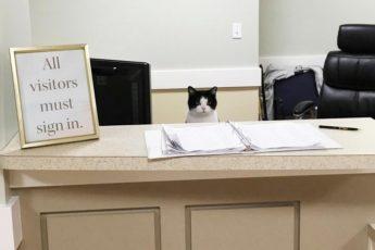 История одной кошки в доме престарелых