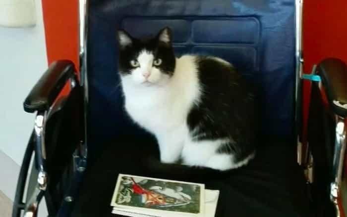 История одной бездомной кошки