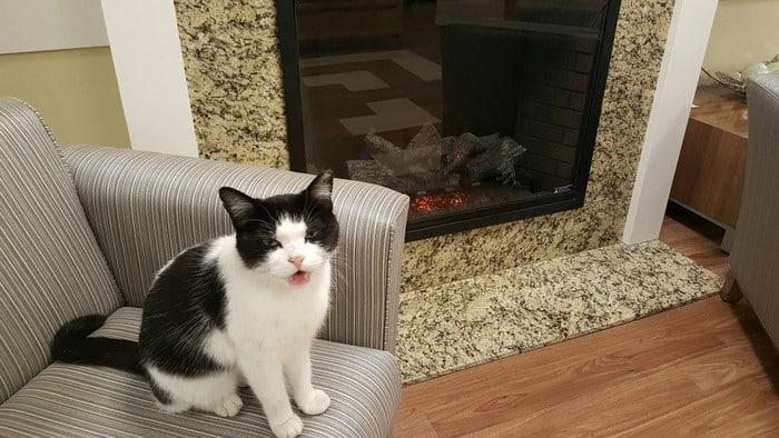 История одной кошки в доме для престарелых