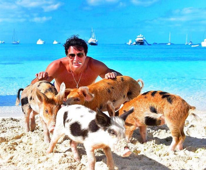 Дикие свиньи в опасности
