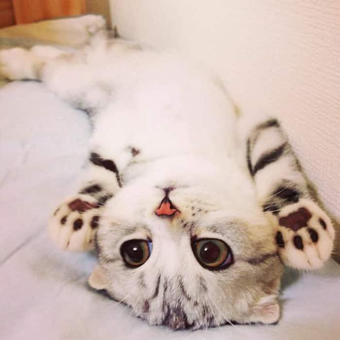 Котенок Ханна