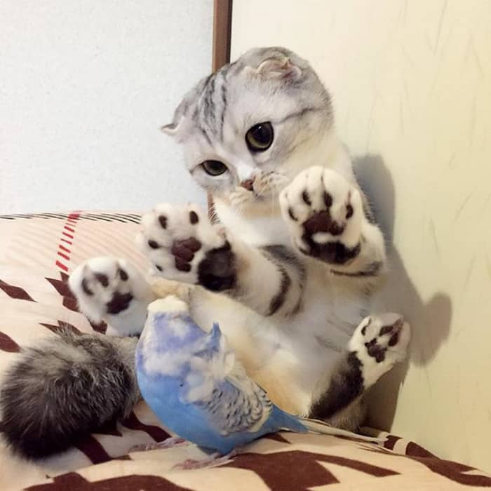 Японская кошечка с огромными глазами