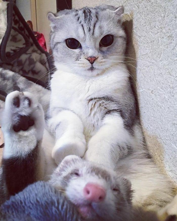 японский котенок