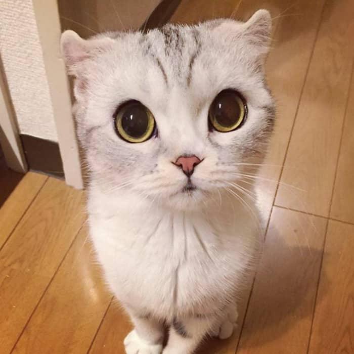 Удивительная кошка в Японии