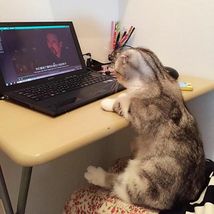 Кошка Ханна звезда инстаграмм
