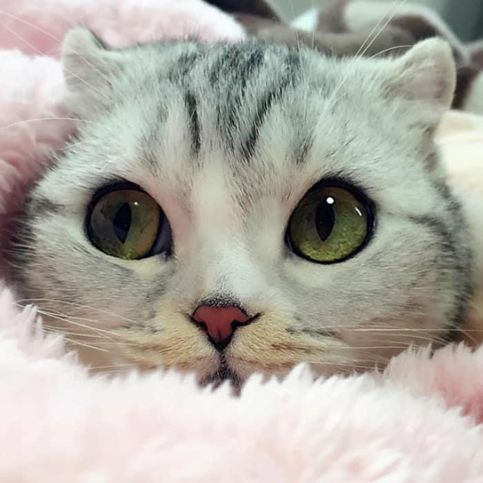 Очаровательные глаза у кошки