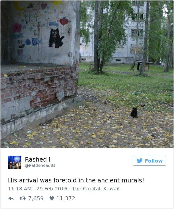 Твит про кошек