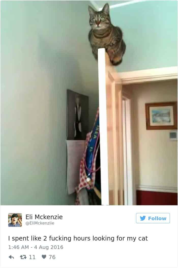 Смешной твит про кошек