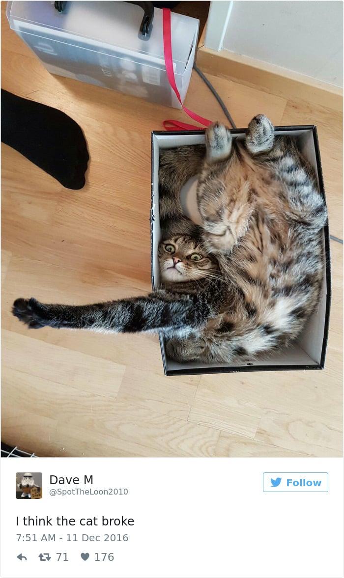 Твит про забавных кошек