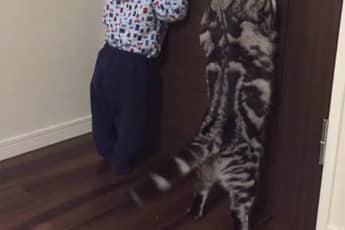 Твит про любопытных кошек