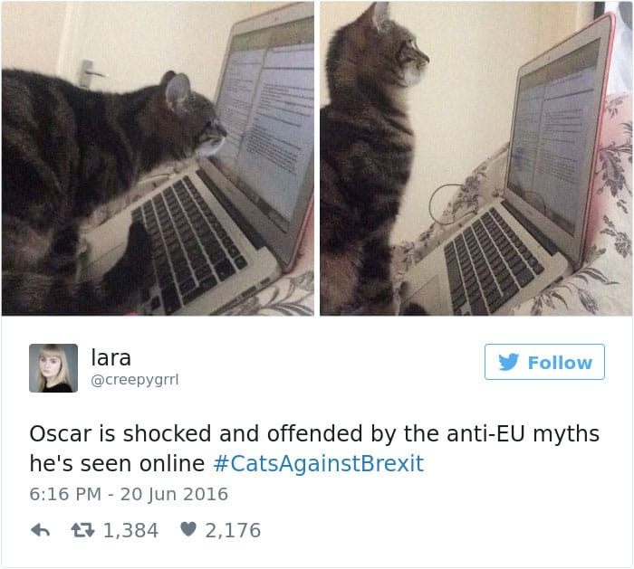 Твит про самых умных кошек