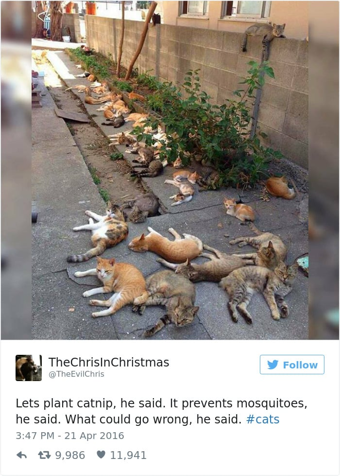 Твит про толпу кошек