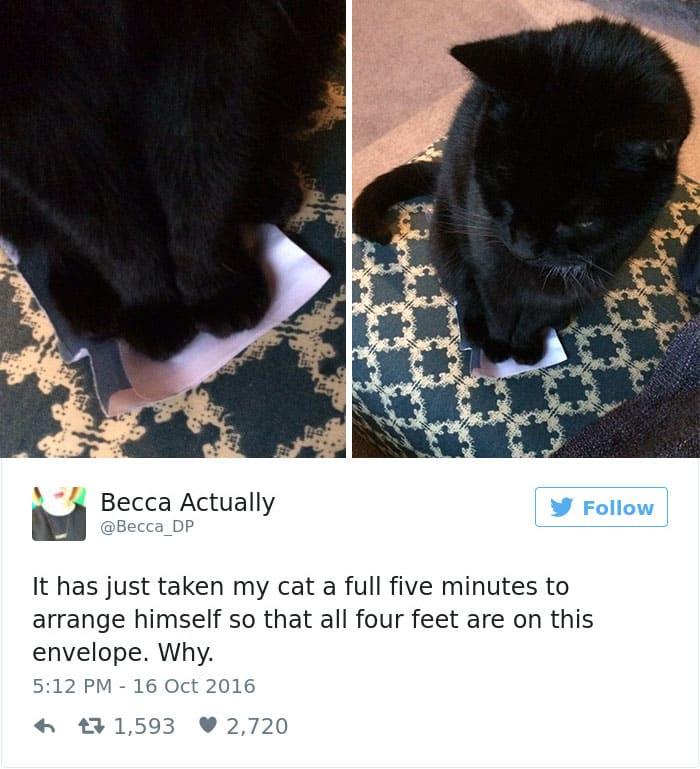 Твит про прикольную кошек