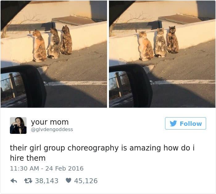 Твит про поведение кошек