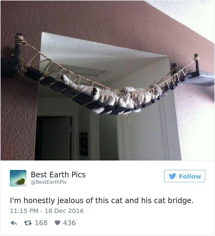 Твит про хозяина кошек