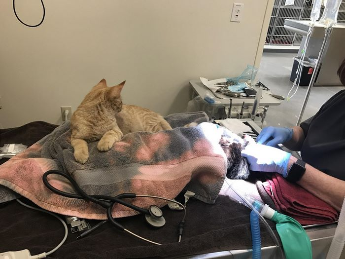 Ветеринарный кот